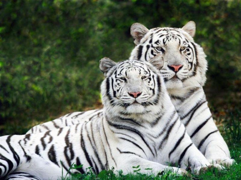 Evde beslenebilecek vahşi hayvanlar