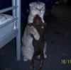 kedilerin ibnelikleri